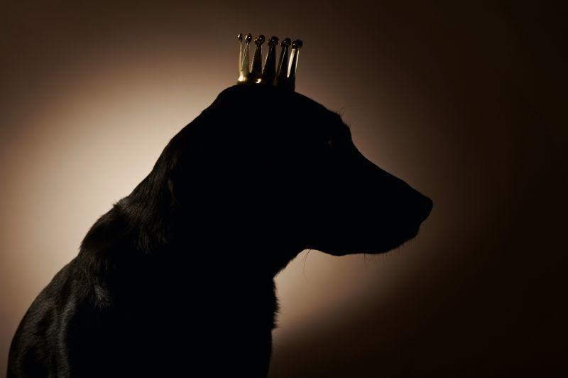 Barkouf ou un chien au pouvoir |